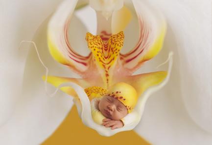 ma vie avec mes orchidée