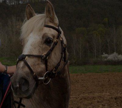Un cheval , sans doute, mais pas n'importe lequelle ...