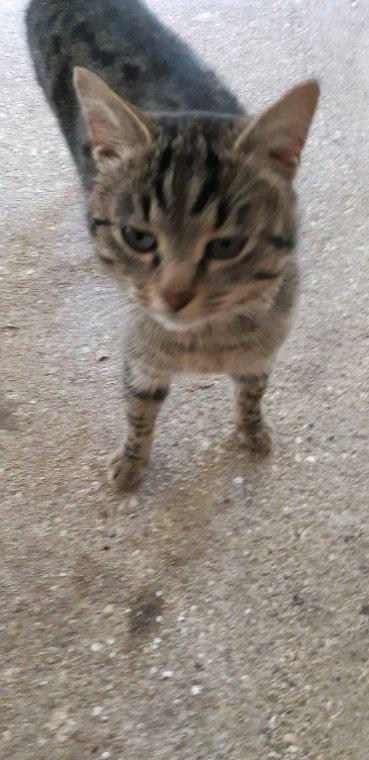 Et voici Minouch!!chat sauvage
