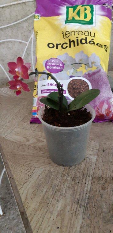Quelques une de mes orchidées ..