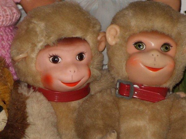 Couple de petits singes