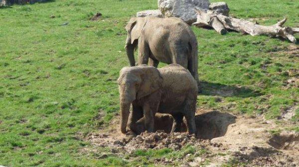 Le Zoo de Beauval (suite et fin)