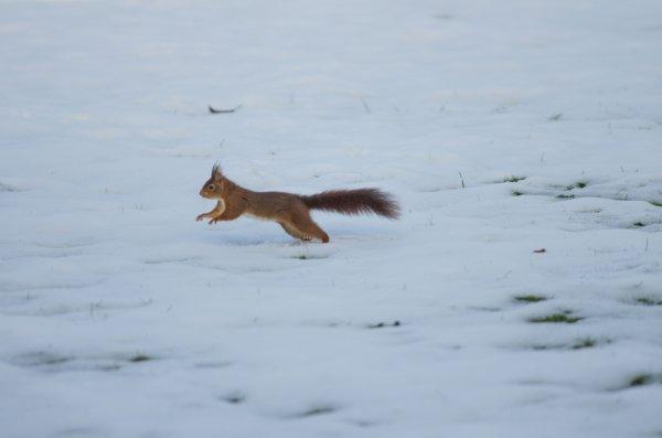 la neige fond ...
