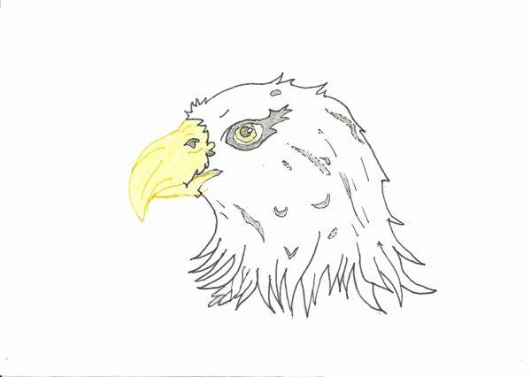 Dessin aigle blog de dessin de mickael - Dessin de aigle ...