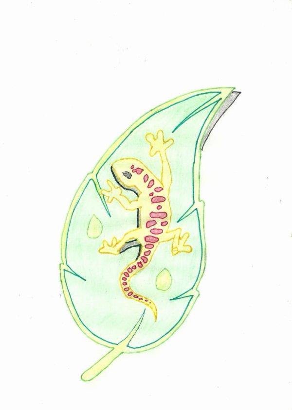 dessin salamandre - Blog de dessin-de-mickael