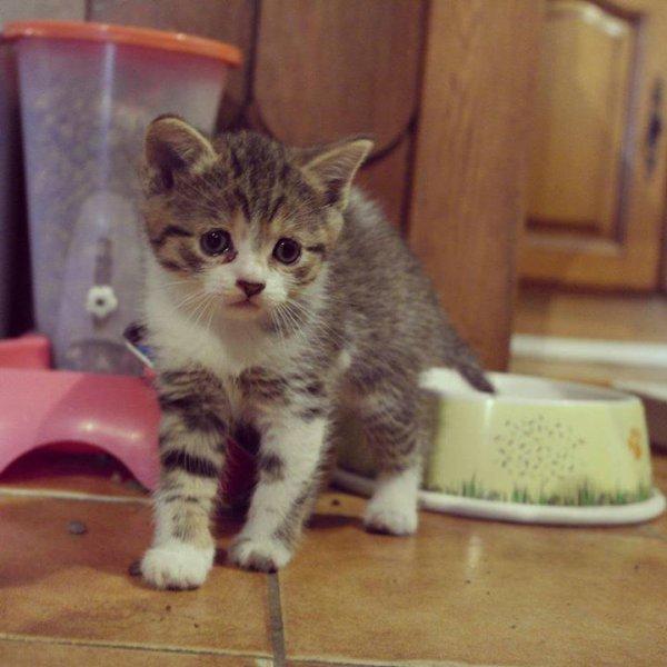 My Cat's :3