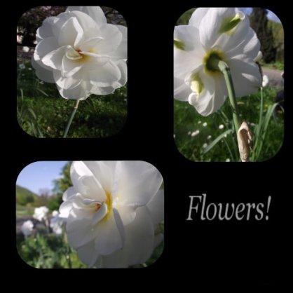 Flowers ! 2