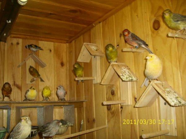 voila une parti de mes oiseaux
