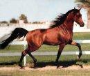 Photo de centre-equestre-belgique