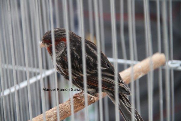 Negro Rojo Mosaico Brasil 2.010.