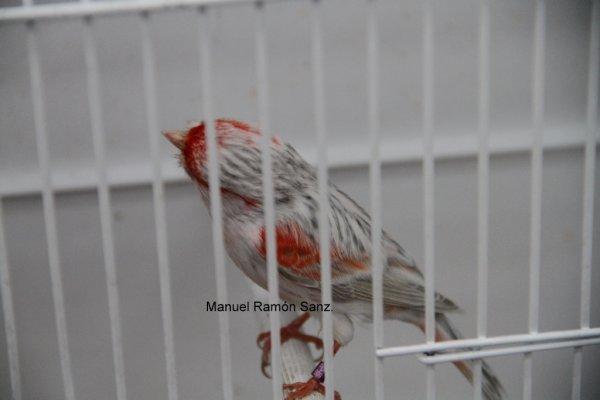 Ágata Opal Rojo Mosaico Reggio Emilia 2.009