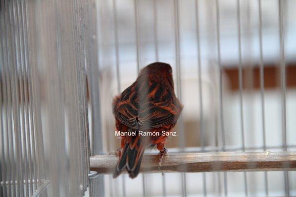 Negro Rojo Intenso, Brasil 2.010
