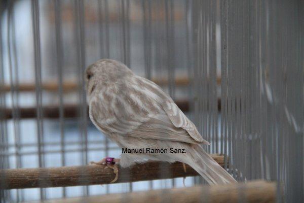 BRUNO OPAL BLANCO. BRASIL 2.010