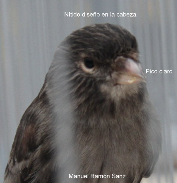 NEGRO ONIX MARFIL ROJO MOSAICO. BRASIL 2.011.