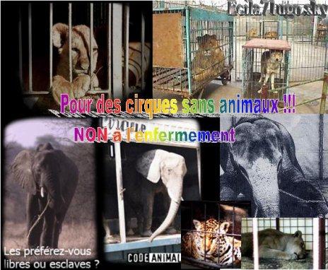 Les animaux ne sont pas des clowns
