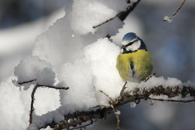 la neige au potager