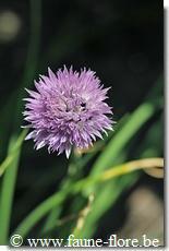 potager en fleurs