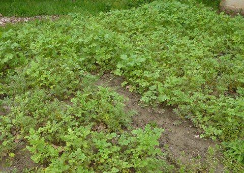 Travaux du mois d'août au jardin potager
