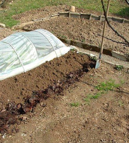 Que faire au potager en octobre et novembre association des jardins familiaux d 39 harfleur - Que faire au jardin en novembre ...