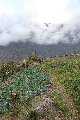 potager dans le Cirque de Mafate sur l'ile de la Réunion