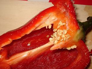 produire des semences de poivrons / piments