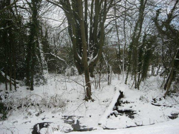 Froid et neige aux jardins