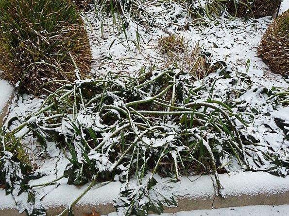 Les bienfaits du froid dans le jardin en hiver