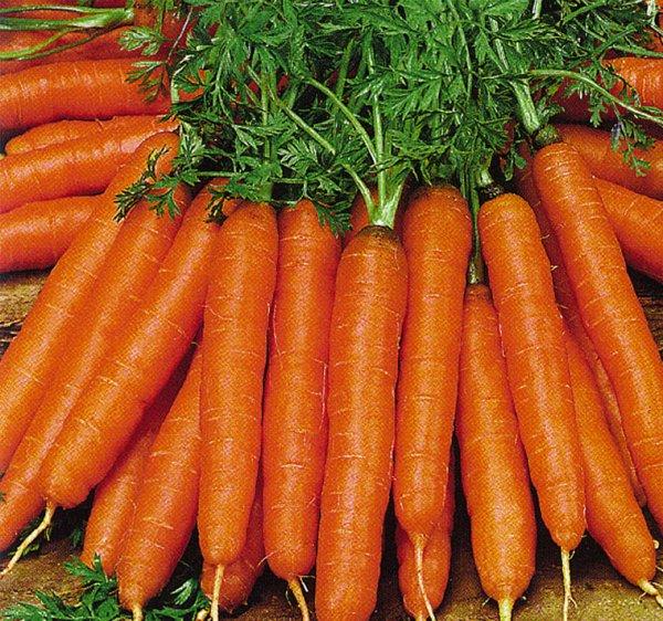 faire pousser de belles carottes bien droites