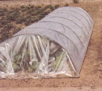 plantation des courgettes