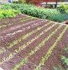 quelques photographies des jardins