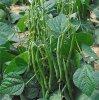 quels légumes pour un premier jardin potager ?