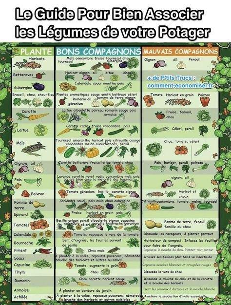 Bien associer les légumes de votre potager