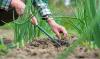 Comment connaître le pH du sol de votre jardin