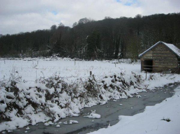 froid et neige au potager