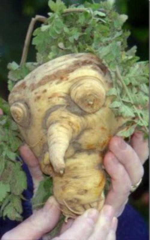 légumes hors normes