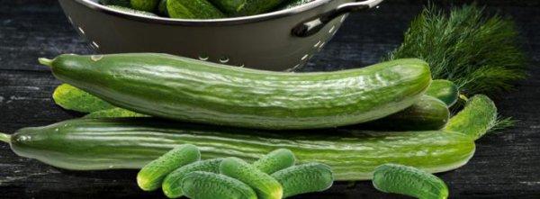 Différence entre concombre et cornichon :