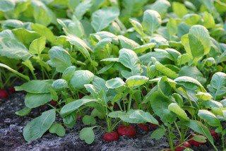 5 légumes à cultiver à l'ombre