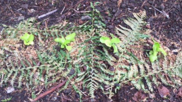 Comment éloigner les limaces naturellement