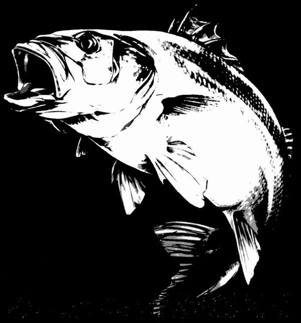 La Commission européenne interdit la pêche de plus d'un bar par jour !