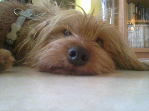 Voici ma chienne