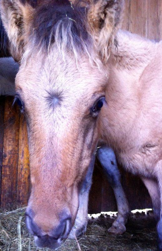 Avec les chevaux, tu sais prendre des risques. Essaie de faire la même chose avec les gens.