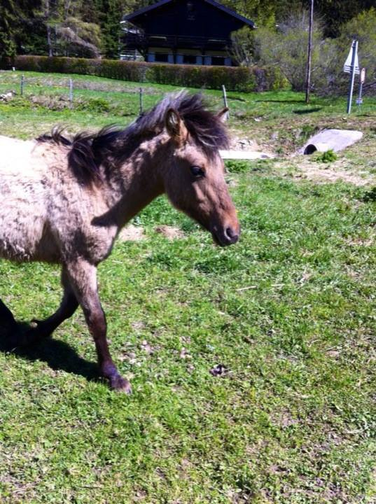 Risquer sa vie avec un cheval, c'est risquer de mourir aux côtés d'un ami qui nous aura accompagné jusqu'à la fin.