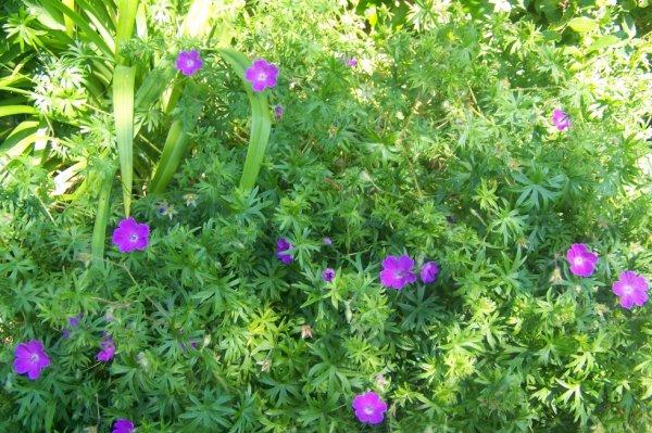 Quelques fleurs sous le soleil!