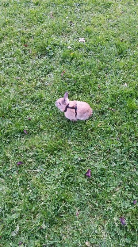Kiwi au parc le 17 05 2014