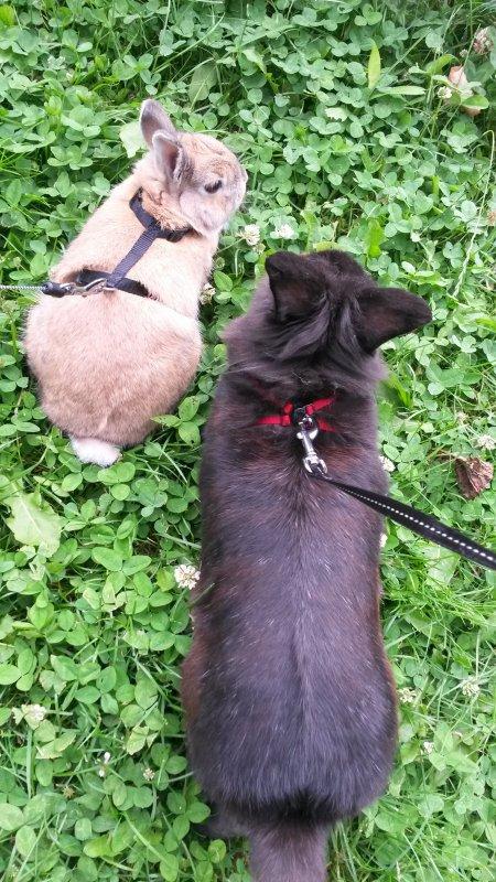 Kiwi et Noisette