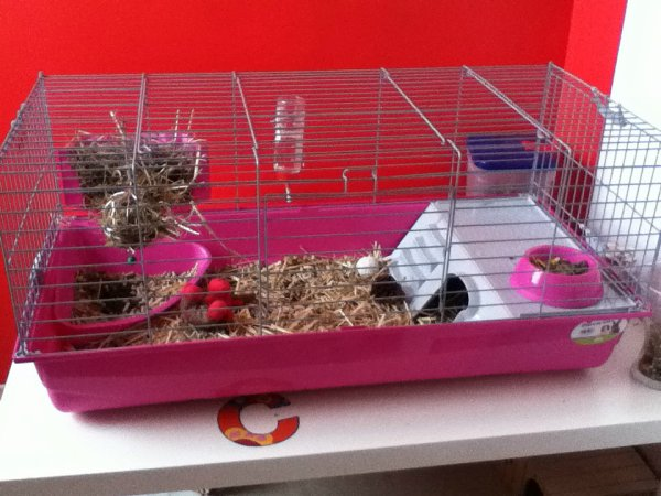 Grande cage !