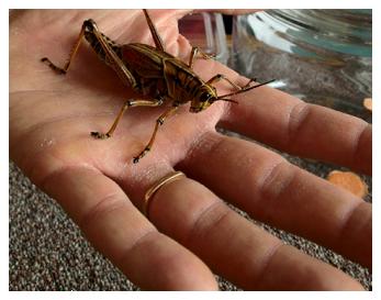 ■ [ Kami Garcia ]  Kami poste une Photo d'une sauterelle