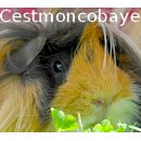 Photo de Cestmoncobaye