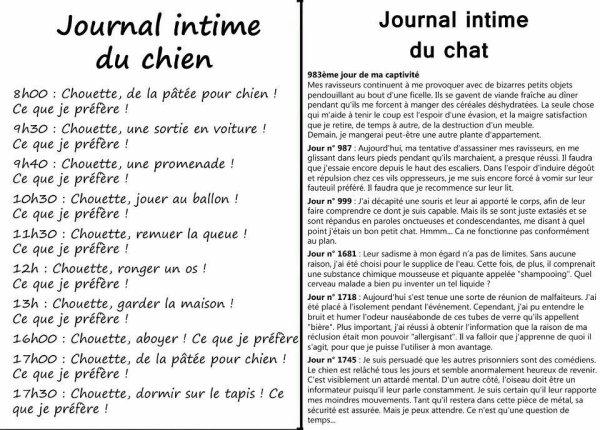 Un peu d'humour :) Le journal intime du chien et le journal intime du chat!