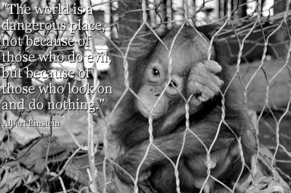 **Le monde ne sera pas détruit par ceux qui font le mal, mais par ceux qui les regardent sans rien faire.** Albert Einstein  ne fermons pas les yeux sur la souffrance animale...
